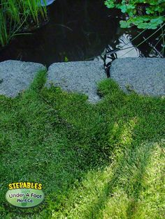 """Eleocharis radicans Miniature Rush -- Amazing """"grass"""" that never extends past mowable height, readily reseeds, and loves wet feet. Sign me up! (I'd probably start it around my garden beds)"""