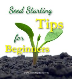Seed Starting Tips for Beginners