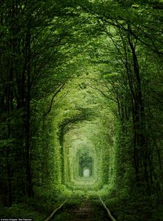 Tunnel of Love is an amusement railway located near Klevan, #Ukraine. It is a railway surrounded by green arches[1] and is three kilometers in length. It is known for being a favorite place for couples to take walks   http://en.wikipedia.org/wiki/Tunnel_of_Love_(railway)