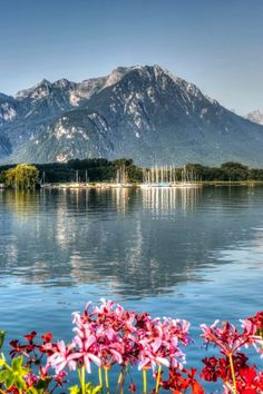 While its jazz festival gets a lot of attention views like this definitely take center stage in Montreux Switzerland Glamping, Annecy France, Lake Geneva, Seen, Jazz Festival, Center Stage, Mount Rainier, Switzerland, Trip Advisor