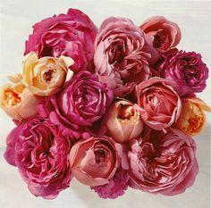 garden roses from Martha Stewart