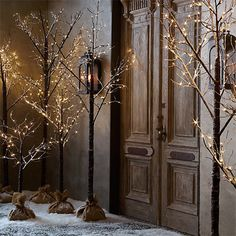 winter wonderland sustainable Christmas trees from your own garden with led fairy lights in pot or burlap bag
