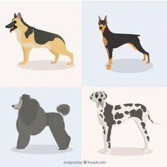 Pack de razas bonitas de perro
