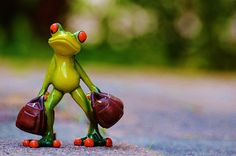 Travel, Time To Go, Frog, Farewell, Travel Funny Frogs, Cute Frogs, Beautiful Vacation Spots, Frog Pictures, Heart In Nature, Cartoon Jokes, Cartoon Ideas, 4k Wallpaper For Mobile, Frog Art