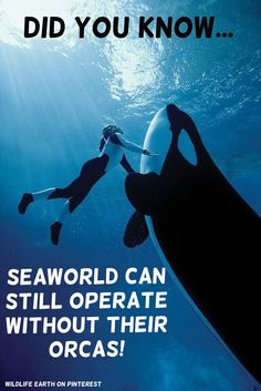 """I will support SeaWorld once they shutdown the Orca entertainment, stop breeding in captivity, and retire their Orcas... Until then... I do not support SeaWord!"" - Daniel Powers, Wildlife Earth on Pinterest."