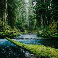 Colors of Nature. Photo: Brett Brooner #forgeyourownpath