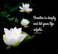 Out of the mud of your fears struggles pain and confusion the breathe in deeply and let your life unfold as a lotus flower unfolds drinking in the sunlight mightylinksfo