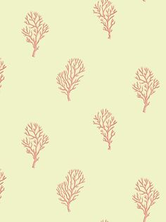 Coral Wallpaper | Sand Dollar | AmericanBlinds.com