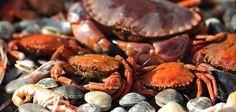 La Fiesta del Marisco de Vigo se ha despedido un año más con las carpas llenas de personas disfrutando del mejor marisco de la Ría. Cuatro días de fiesta en los que se han degustado más de setenta toneladas de marisco.. Seafood, People