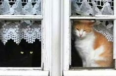 ♥ Cats in =^-^= the Window ♥