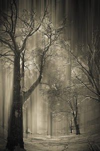 Shadows and mist ala fantasy forest ♥