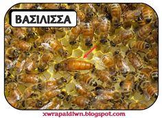 Όλοι μας έχουμε δει μέλισσες να πετούν  από λουλούδι σε λουλούδι. Όλοι μας έχουμε απολαύσει το μέλι, τη μοναδική  αυτή θρεπτική τροφή πο...