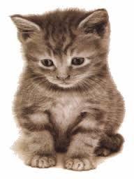 Výsledek obrázku pro kotata gif