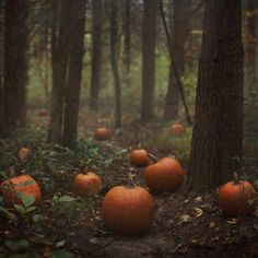 I would love to walk through a forest filled with pumpkins in Autumn.