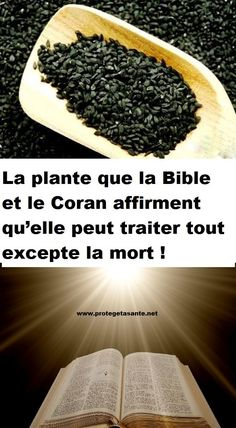 La plante que la Bible et le Coran affirment qu'elle peut traiter tout excepte la mort ! Sante Plus, Psoriasis Diet, Delta Force, Superfoods, How To Dry Basil, Cancer, Buffet, Health Care, Remedies