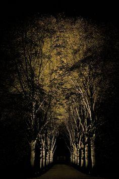 Tree Glow Silhouette http://www.janmoyerdesign.com/villanova/index.htm