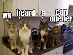 Haha so true, my cat is definitely one of them. Or just a tap on the can , she comes running to me like a lightening.
