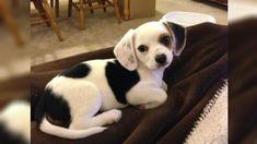 21 adorable dog crossbreeds you've probably never heard of #puppydogtails
