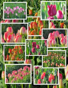 Scene Through My Eyes: Mosaic Monday Beautiful Collage, Beautiful Flowers, Montreal Botanical Garden, Flower Collage, Mix Photo, Flower Quilts, Daylight Savings Time, Happy Spring, Paper Decorations