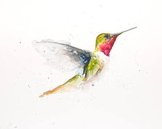 Humming Bird Original Water Color Water Colour Print 10x8