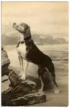 Wonderful vintage dog photo prouddog