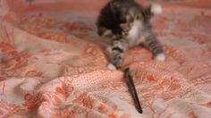 Котёнок и кисточка. Маленькая кошечка играет с кисточкой