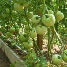The Mittleider method for gardening