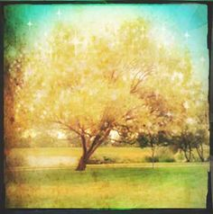 Queda Fotografia, Fotografia Árvore, A arte da natureza impressão, estrelado Lights, Romântico, tela emoldurada