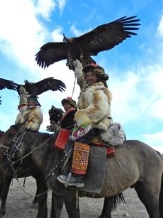 with hawks and horses