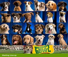 Forget the Super Bowl! Watch the Puppy Bowl!