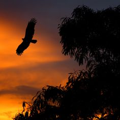 This reminds me of the power of birds and how beautiful it could be to fly like that. Eagle at Sunset by Carlos Gotay