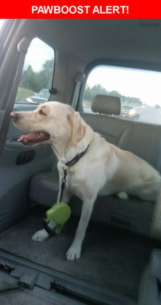 Is this your lost pet? Found in Colorado Springs, CO 80917. Please spread the word so we can find the owner!  Description: Hello! we just found a male unaltered yellow lab about 80 Lbs and about 2 yrs old roughly. He was found wearing a black subaru collar.  Nearest Address: Carefree Circle North, Colorado Springs, CO, United States