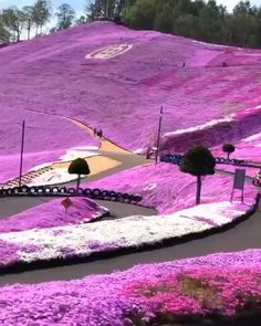 Sea of flowers in Hokkaido, Japan via w - Diy Crafts Projects DIY Videos Crafts Places Around The World, The Places Youll Go, Cool Places To Visit, Around The Worlds, Beautiful Places To Travel, Wonderful Places, Beautiful Things, Vacation Places, Dream Vacations