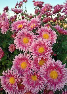 ♣ * Beautiful flowers of nice colors.  - Jose Zamora - Google+