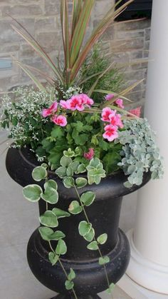 frost, vinca vine, spike and fillers – LOVE it for the front porch planters!diamond frost, vinca vine, spike and fillers – LOVE it for the front porch planters! Container Flowers, Flower Planters, Container Plants, Container Gardening, Flower Pots, Gardening Tips, Gardening Gloves, Geranium Planters, Gardening Vegetables
