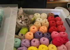 Have you seen my knitting needles?