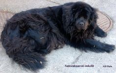 Sweetheart Dogs, Animals, Animales, Animaux, Pet Dogs, Doggies, Animal, Animais