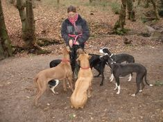 How to Start a Dog Walking Business - Top Dog Tips