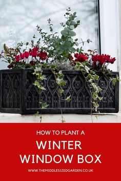 Window box plants and ideas for a winter window box that will last you from fall (autumn!) to Christmas and into spring. #gardening #middlesizedgarden #backyard #garden Winter Window Boxes, Window Box Plants, Container Plants, Container Gardening, Low Maintenance Garden Design, Easy Garden, Garden Ideas, Garden Privacy, Colorful Garden