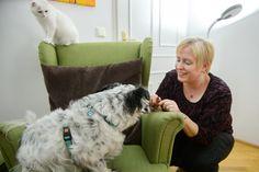 Die tiergestützte psychologische Beratung hat das Ziel, die körperlichen, kognitiven und emotionalen Funktionen der KlientInnen günstig zu beeinflussen und vor allem auch das eigenständige Handeln sowie das subjektive Wohlbefinden der KlientInnen zu fördern! Bean Bag Chair, Dogs, Animals, The Client, Counseling Psychology, Feel Better, Goal, Animales, Animaux