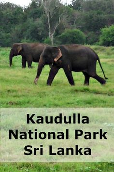 Kaudulla National Park in Sri Lanka is home to over 200 wild elephants. Once a year these elephants gather around a large water reservoir. Amazing to see.