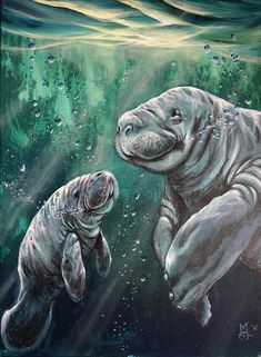 Manatee Painting - Thats My Mom by Marco Antonio Aguilar Beautiful Sea Creatures, Marco Antonio, Water Animals, Underwater Creatures, Fish Art, Summer Art, Animal Paintings, Marine Life, Spirit Animal