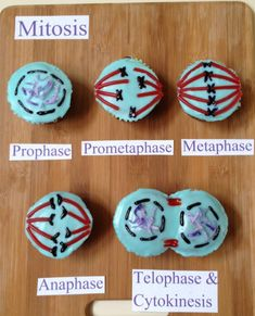 Top 15 Science Cupcakes on the Web