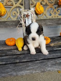 Breed: Saint bernard Gender: Male Registry: AKC Personality: friendly Date Available: Nov 19 2020 Arf! I'm Maden, a cheerful male Saint bernard puppy. Bring me home today and I'll bring you heaps of joy. I fling a dashing multi-colored coat and was born to parents of family-oriented and good-natured personalities. I am great with kidsRead More The post Maden appeared first on VIP Puppies - Puppy Finder - Puppies for Sale & Puppies for Adoption. If you've enjoyed this post, be sure to follow…