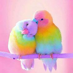 Diamantmalerei – Rainbow Parrot – Full of Beauties Baby Animals Super Cute, Cute Little Animals, Cute Funny Animals, Cute Cats, Cute Little Things, Cute Birds, Pretty Birds, Beautiful Birds, Animals Beautiful