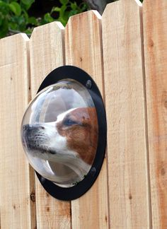 Pet Peek - porthole for your pup