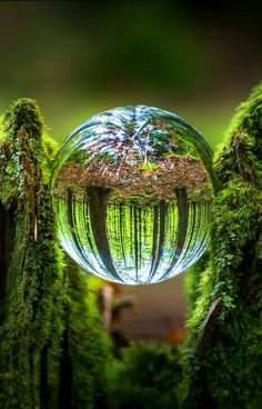Glass Ball in a Moss Covered Tree Trunk | Power Orb