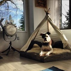 18 Gorgeous Dog Teepees That Will Make You Want To Upgrade Your Dog Bed BowWow Times