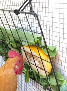 Peck-It-Clean Veggie Feeder for Chickens, Small x Black – Includes Grid Panel, Cord, Togg Chicken Fence, Chicken Coup, Chicken Garden, Chicken Life, Small Chicken, Backyard Chicken Coops, Chicken Coop Plans, Chicken Runs, Diy Chicken Coop