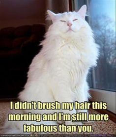 Funny Animal Pictures Of The Day - 26 Pics | And so modest too!